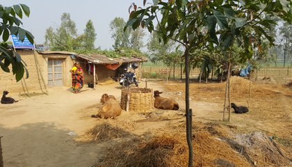 Bangladesh_village