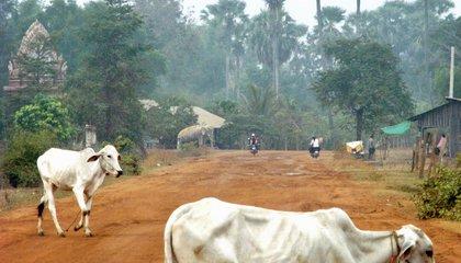 cambodia_rural road (Silvia)