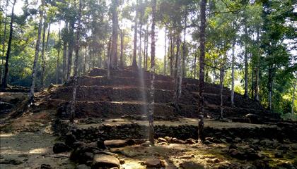 CLPI RMI forest.png