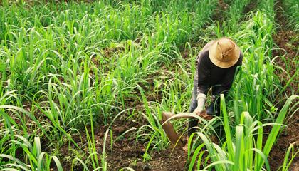 hombre_agricultura.png
