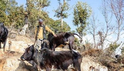 Haliya-36_Bhabishya Paudel.jpg
