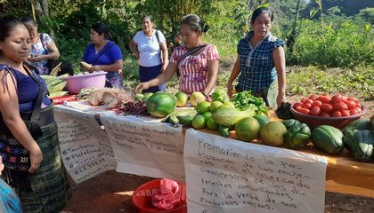 Informe-Guatemala-OSC.jpg