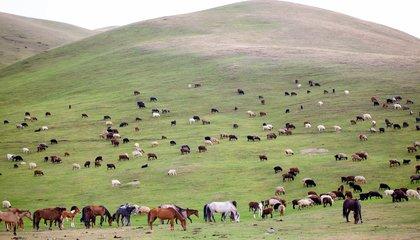 Kyrgyzstan_Pastures_MIRLAN ABDULAEV (21).jpg