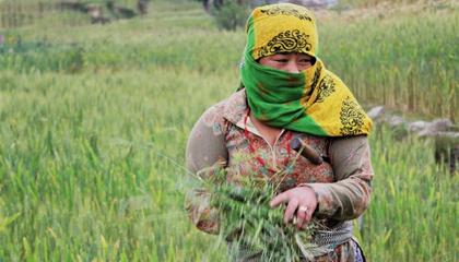 Nepali farmer-covid19.png