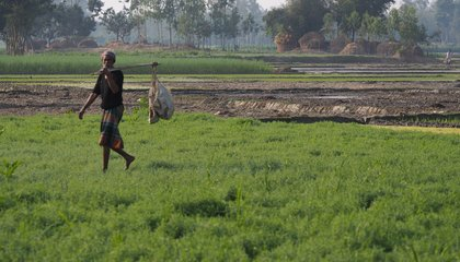 Bangladesh_farmers in the field