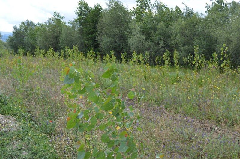 Planted area in Devoll Municipality, Albania
