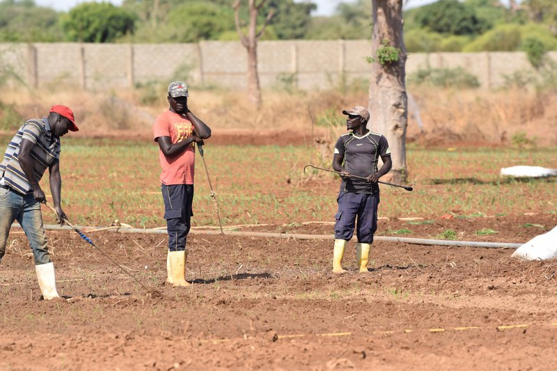 Farmers in Senegal/IsraelBionyi/ILCAfrica