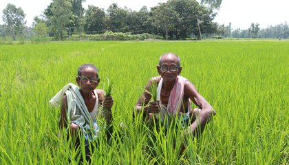 Tenant Farmers_Dev Narayan Chaudhary and Raj Narayan Chaudhary, Sarlahi District_ Photo -CSRC.JPG