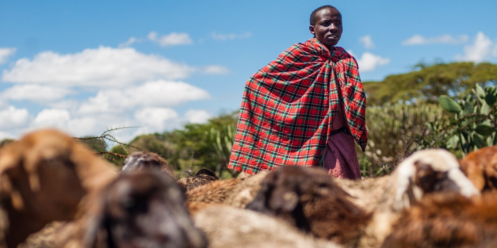 A Maasai harder looking after his flock