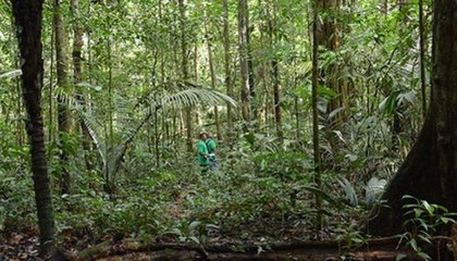 a_tropical_forest_in_suriname_amazon_conservation_team.jpg