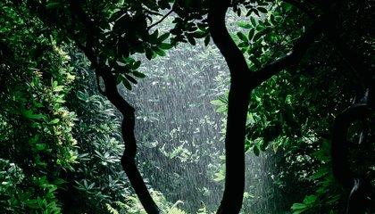Kiambu forest
