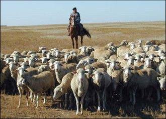 Pastures, Rangelands, ILRI
