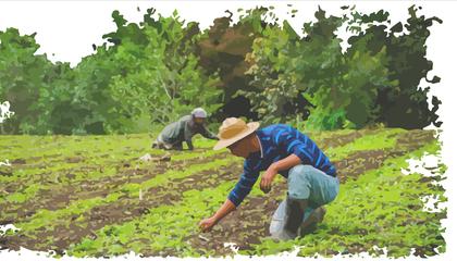imagen para portada informe Guatemala.png
