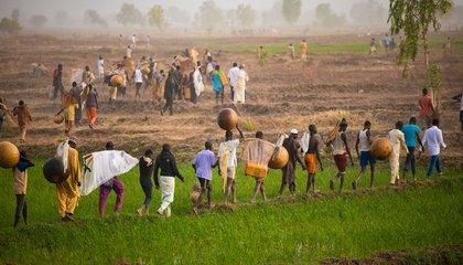 india-farm.jpg