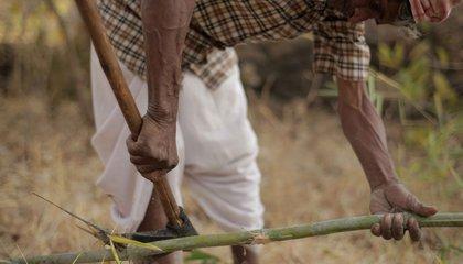 india jason taylor 7.jpg