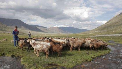 mongolia jason taylor 2.jpg
