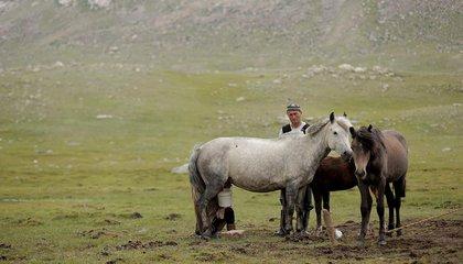 mongolia jason taylor 34.jpg