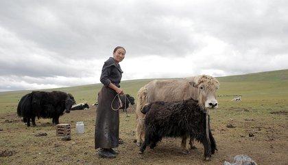 mongolia jason taylor 35.jpg