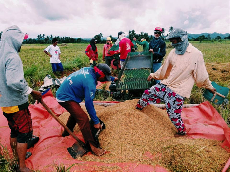 rice producers philippines-covid19.png