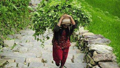 asia-farmers-shutterstock