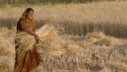 woman_harvesting_wheat_raisen_district_madhya_pradesh_india.jpg