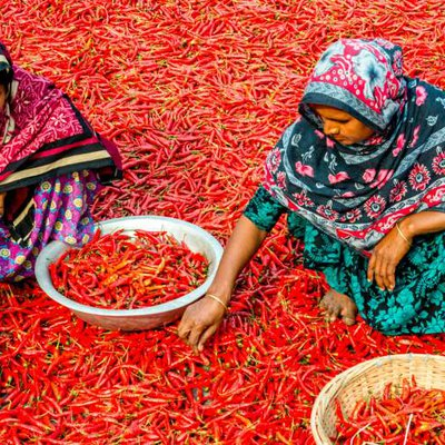 India women chili farmers